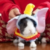 thumbs tumblr l6dotaorb31qzpe8uo1 500 Animals dressed as other animals   best of