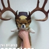 thumbs tumblr lowmacfvwx1qzrlhgo1 500 Animals dressed as other animals   best of