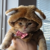 thumbs tumblr lqida72mnk1qjqdfao1 500 Animals dressed as other animals   best of