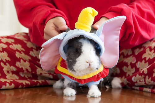 tumblr l6dotaorb31qzpe8uo1 500 Animals dressed as other animals   best of