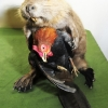 thumbs taxidermy 7 Crap Taxidermy