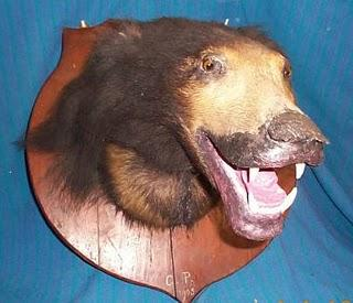 taxidermy bear Terrible taxidermy