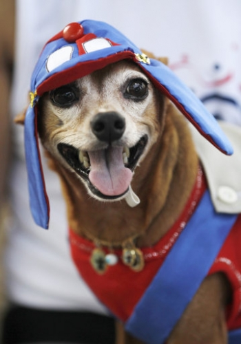 12752261 Blocao dog carnival parade in Rio de Janeiro   photos