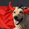thumbs 12752257 Blocao dog carnival parade in Rio de Janeiro   photos