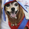 thumbs 12752261 Blocao dog carnival parade in Rio de Janeiro   photos