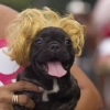 thumbs 15701032 Blocao dog carnival parade in Rio de Janeiro   photos