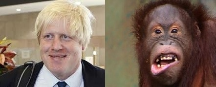 boris orangutan 3 Boris Johnson looks like an orangutan
