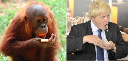 boris orangutan 4 Boris Johnson looks like an orangutan