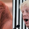 thumbs boris orangutan 5 Boris Johnson looks like an orangutan