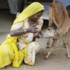thumbs breastfeeding 2 Women Breastfeeding Animals: Photos 