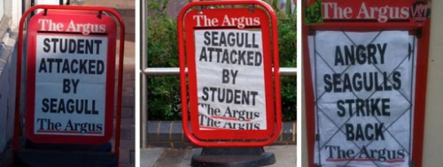 seagulls Modern Britain described in 10 photos