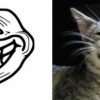 thumbs rage faces 14 Rage faces   with CATS