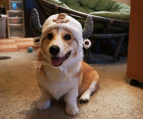 corgnelius Corgnelius is the worlds cutest corgi