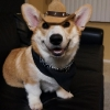thumbs corgnelius 2 Corgnelius is the worlds cutest corgi