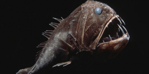 dyrua Creatures from the Mariana Trench