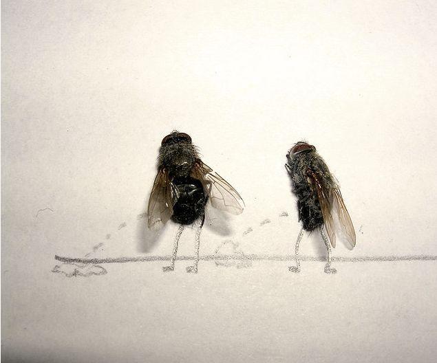 dead-fly-art-1