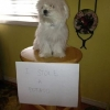 thumbs tumblr m8v7nty25d1re4ne0o1 500 Dog Shaming: because your dog is shamed (photos)