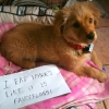 thumbs tumblr m8vrj2cxj61re4ne0o1 500 Dog Shaming: because your dog is shamed (photos)
