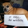 thumbs tumblr m8wruhs9ce1re4ne0o1 500 Dog Shaming: because your dog is shamed (photos)