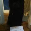 thumbs tumblr m8xki2ozr81re4ne0o1 500 Dog Shaming: because your dog is shamed (photos)