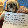 thumbs tumblr m8xmm0b6zs1re4ne0o1 500 Dog Shaming: because your dog is shamed (photos)