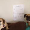 thumbs tumblr m8yl7bvonb1re4ne0o1 500 Dog Shaming: because your dog is shamed (photos)