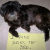 thumbs tumblr m8z54nviqt1re4ne0o1 500 Dog Shaming: because your dog is shamed (photos)