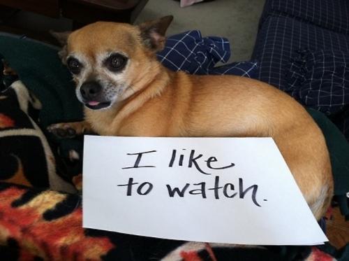 tumblr m8wruhs9ce1re4ne0o1 500 Dog Shaming: because your dog is shamed (photos)