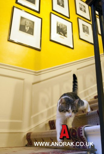 10202680 Larry The Downing Street LolCat