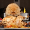 thumbs funny thanksgiving  Thanksgiving Photos: The Funniest Ones