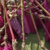 thumbs 7534299 Gulabi gang   in photos