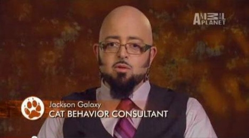 jobs 3 Funny job titles in TV captions