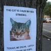 thumbs cat Motivational animal photos (with tree support group)
