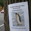 thumbs penguin Motivational animal photos (with tree support group)