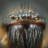 thumbs house spider The best creepy crawlies microscope photos