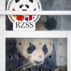 thumbs 12219877 Scotland Pays For Chinese Panda Bears With Fishy Salmon And Turning A Blind Eye To Norways Nobel Woes