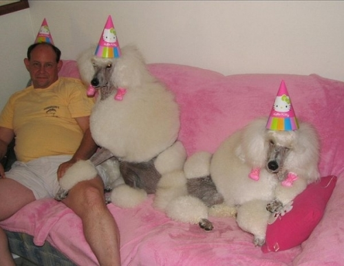 pet birthdays 31 The 10 best pet birthday party photos ever 