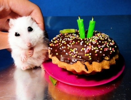 pet birthdays The 10 best pet birthday party photos ever 