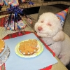thumbs pet birthdays 5 The 10 best pet birthday party photos ever 