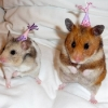 thumbs pet birthdays 6 The 10 best pet birthday party photos ever 