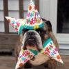 thumbs pet birthdays 7 The 10 best pet birthday party photos ever 