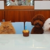 thumbs pet birthdays 77 The 10 best pet birthday party photos ever 