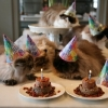 thumbs pet birthdays 8 The 10 best pet birthday party photos ever 