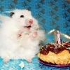thumbs pet birthdays 80 The 10 best pet birthday party photos ever 