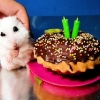 thumbs pet birthdays The 10 best pet birthday party photos ever 