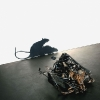 thumbs rubbish shadow sculptures 8 Shadow sculptures made of rubbish are brilliant (photos)