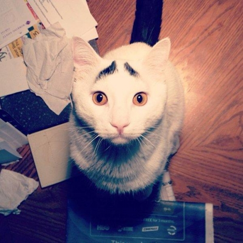 sam eyebrow 1 Sam the cat has eyebrows (photos)