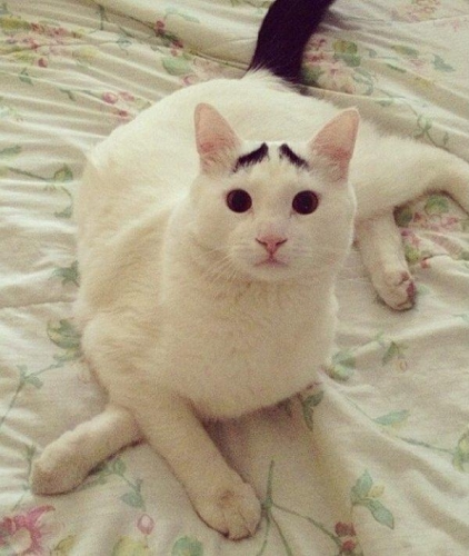 sam eyebrow 56 Sam the cat has eyebrows (photos)