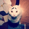 thumbs sam eyebrow 1 Sam the cat has eyebrows (photos)