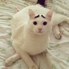 thumbs sam eyebrow 56 Sam the cat has eyebrows (photos)